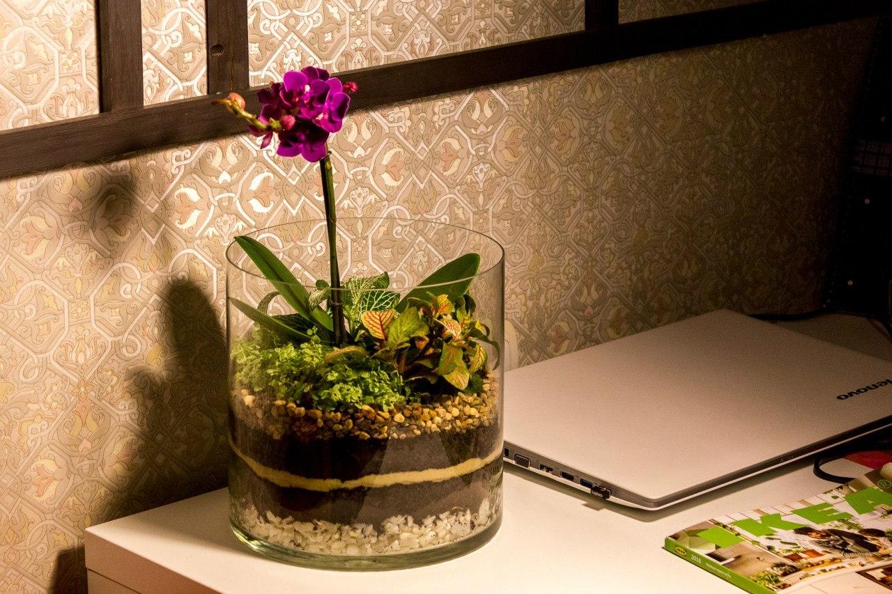 Флорариум своими руками с фото