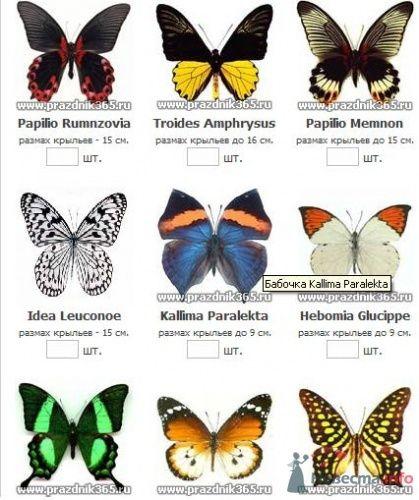 Бабочки - фото 185 Ночь'нушка