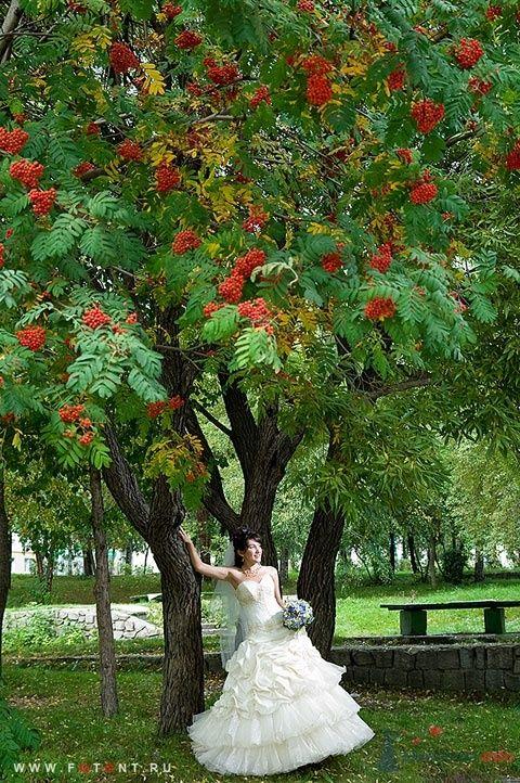 Фото 63822 в коллекции Свадьбы - Фотограф Сергей Алексеев