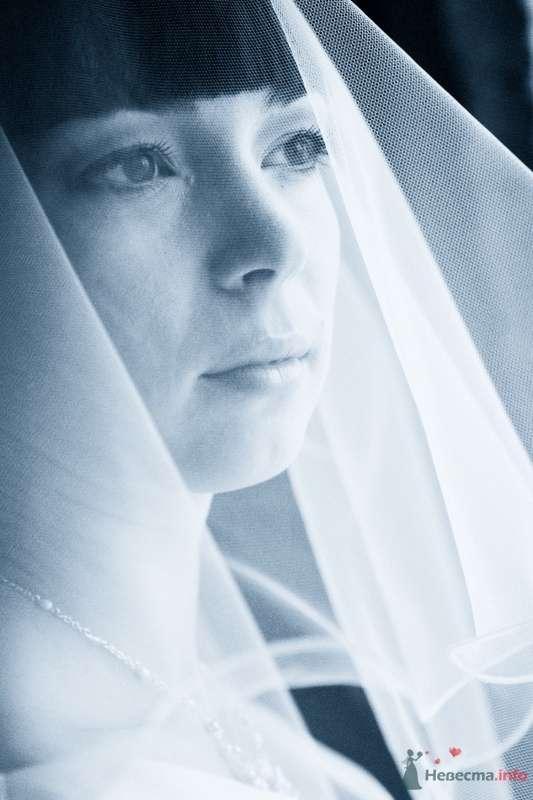 """Свадьба Гены и Анастасии - фото 66027 Студия """"MAGIQUE"""""""