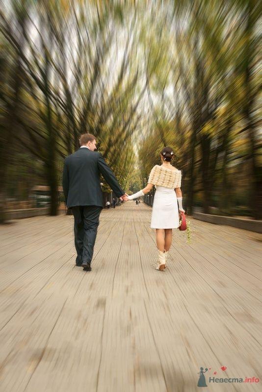 Свадьба - фото 65858 Фотограф Леонид Шафтан