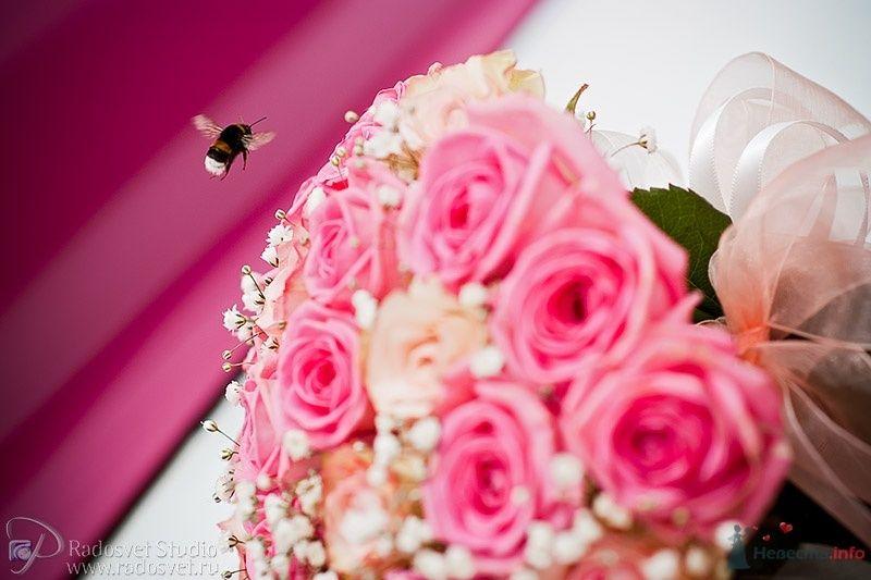 Фото 33817 в коллекции Свадебное фото - Фотограф Радосвет Лапин