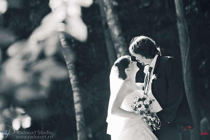Фото 39897 в коллекции Свадебное фото - Фотограф Радосвет Лапин