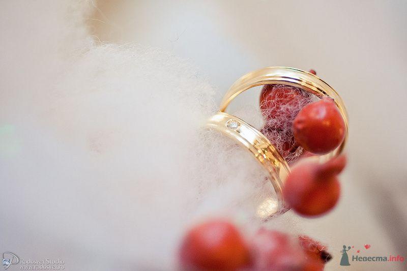 Золотые кольца с ободками на белом фоне с красными ягодками. - фото 80130 Фотограф Радосвет Лапин