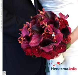 Фото 103352 в коллекции Красная свадьба! - Невеста Настенька