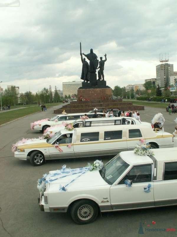 Фото 68997 в коллекции Свадебный Flashmob 1.  - Организатор торжеств Антон Уткин