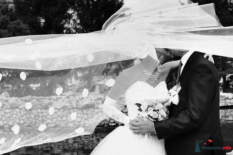 Фото 108022 в коллекции Свадебная фотография - Фотограф Анастасия Яценко