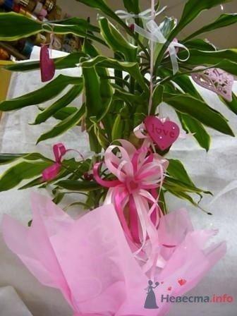 """Фото 72668 в коллекции упаковка подарков - """"Дом праздника"""" - свадебное оформление"""