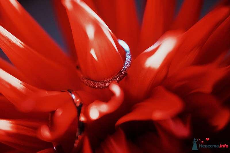Фото 89010 в коллекции Катя и Серж! Свадебная серия! - Свадебный фотограф. Татьяна Гаранина