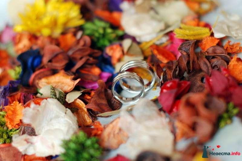 Фото 130092 в коллекции Свадьба Портфолио - Камилла ф