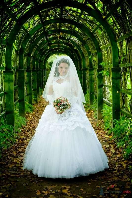 Фото 58204 в коллекции свадьба 25.07.2009 - Орифанэ