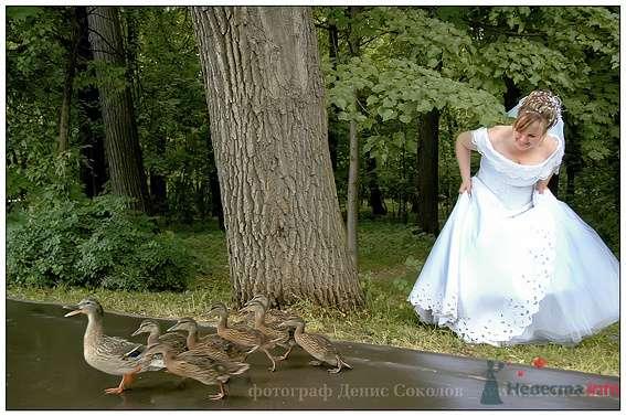 Фото 74888 в коллекции свадебные фото - Фотограф Денис Соколов