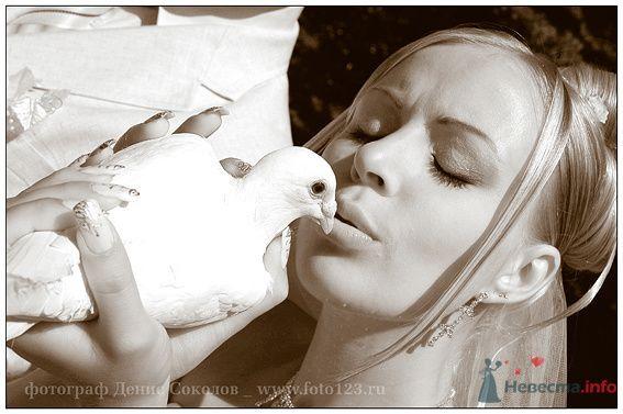 Фото 74903 в коллекции свадебные фото - Фотограф Денис Соколов