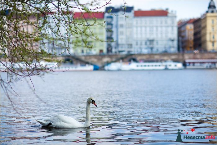 Фото 90725 в коллекции Прага - Фотографы Никифоровы-Гордеевы Сергей и Константин