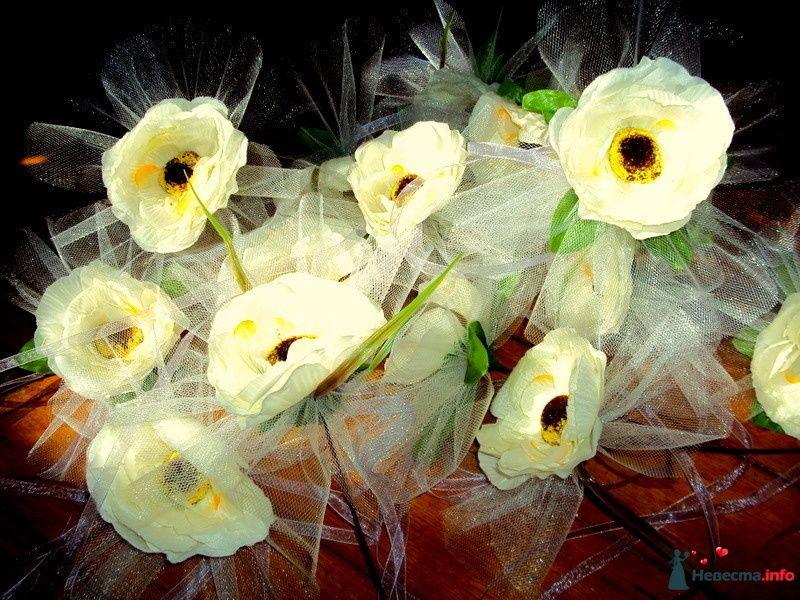 Фото 99199 в коллекции Мои фотографии - Н-ка