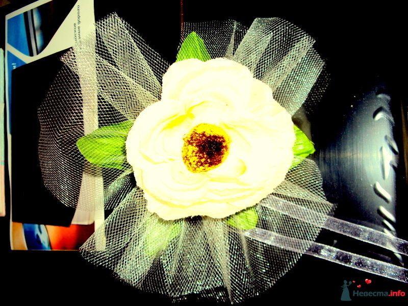 Фото 99200 в коллекции Мои фотографии - Н-ка