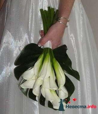 Фото 84853 в коллекции Букет Невесты - Свадебный распорядитель. Яна
