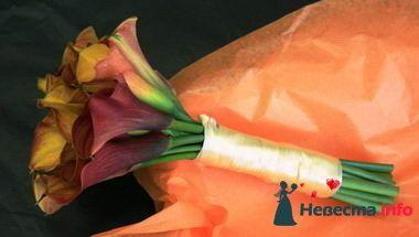 Фото 84860 в коллекции Букет Невесты - Свадебный распорядитель. Яна