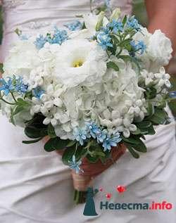 Фото 96614 в коллекции Букет Невесты - Свадебный распорядитель. Яна