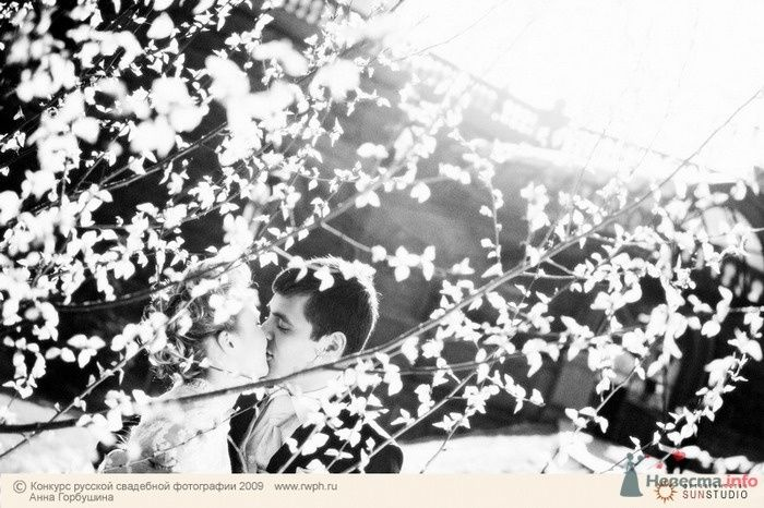Фото 25504 в коллекции Финал Конкурса русской свадебной фотографии 2009. Фотоотчёт - Анна Горбушина - фотоагентство SunStudio