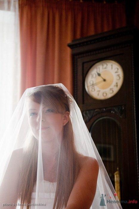 Фото 35561 в коллекции Мои фотографии - Анна Горбушина - фотоагентство SunStudio