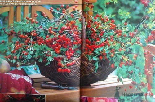 Фото 20599 в коллекции Осенняя тема - Magrateya