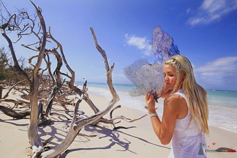 Танец с кораллами - фото 67547 Фотограф Елена Зотова