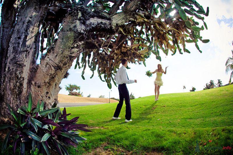 Жених и невеста стоят в парке возле большого дерева - фото 71470 Фотограф Елена Зотова