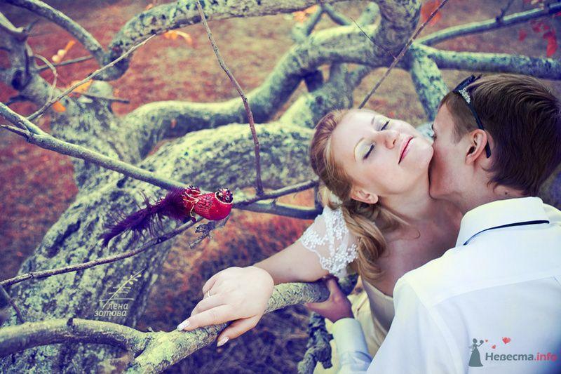Сон принцессы в волшебном саду Варадеро - фото 71568 Фотограф Елена Зотова