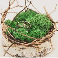Гнездо с кольцами на берёзовом пеньке