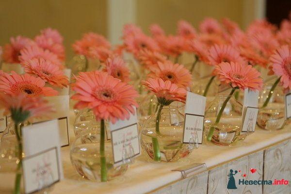 Кремовые астры в круглых вазах в декоре для табличек. - фото 111873 Александра Ваш Свадебный Распорядитель