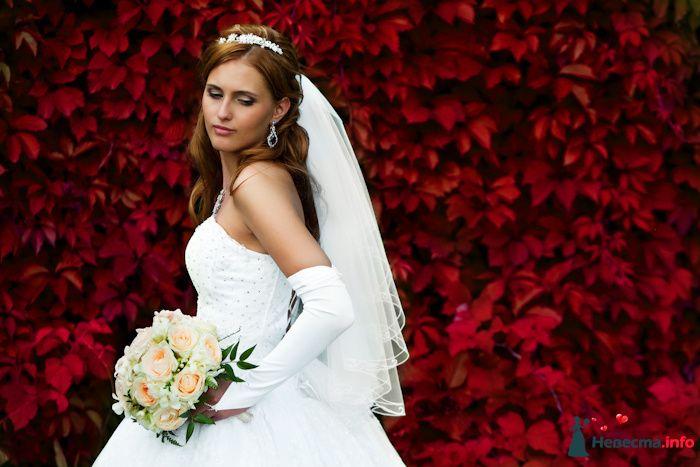 Фото 91969 в коллекции Мои фотографии - Свадебный фотограф Роман Пламеневский