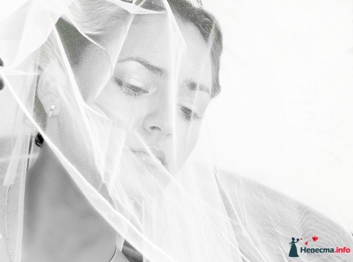 Фото 109350 в коллекции I love it - Фотограф Николай Майоров