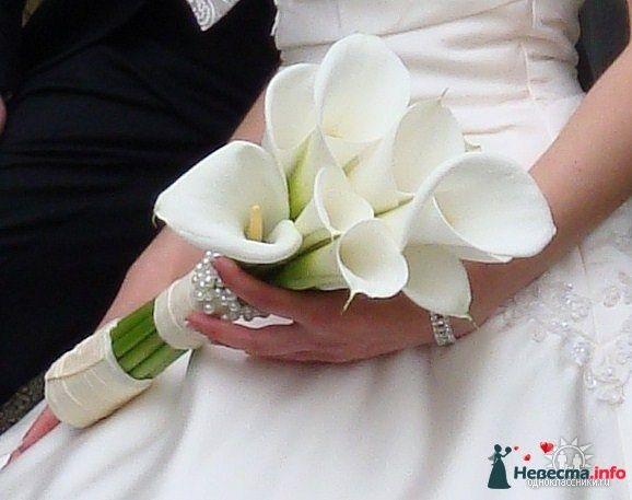 Фото 96148 в коллекции Мои фотографии - Невеста01