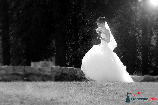 Фото 98499 в коллекции Свадебная фотография - Невеста01