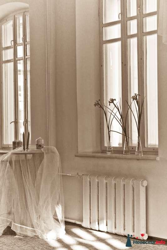 Фото 100266 в коллекции Мои фотографии - Фотограф Елена Левина