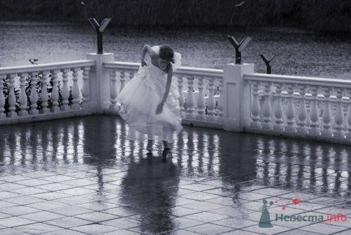 rain - фото 8148 Фотограф Олег Ванилар