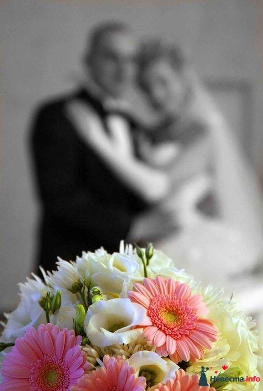Фото 103255 в коллекции свадебный фотограф Ирина Калашникова 8-903-642-5940 - свадебный фотограф Ирина Калашникова