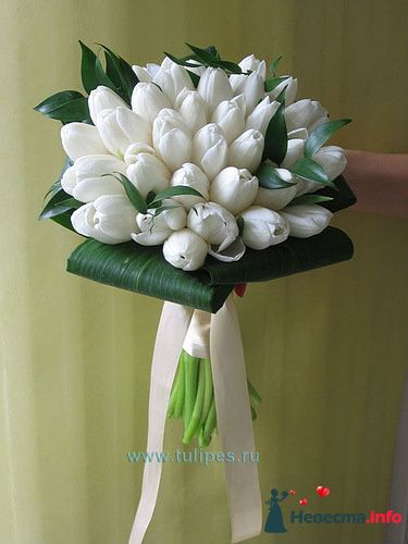 Белый - тюльпаны 2 - фото 124686 Zmeika