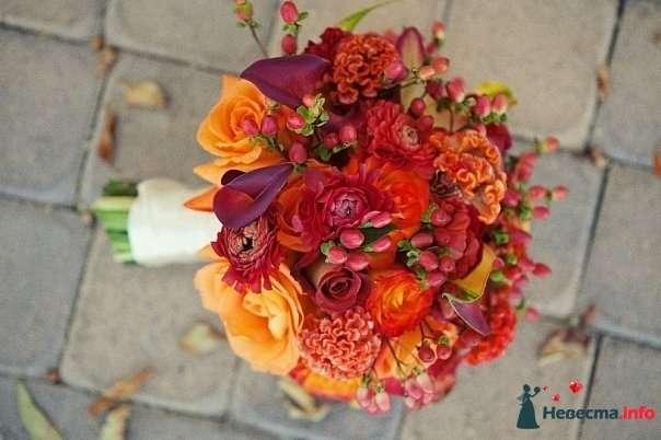 Букет невесты в осенних тонах из бордовых калл, оранжевых и бордовых роз, красного гиперикума, оранжевой целозии и георгин, - фото 128971 Mria