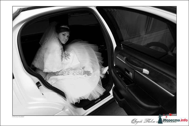 Свадебный фотограф Николай Сульженко - фото 109420 Свадебный фотограф Николай Сульженко