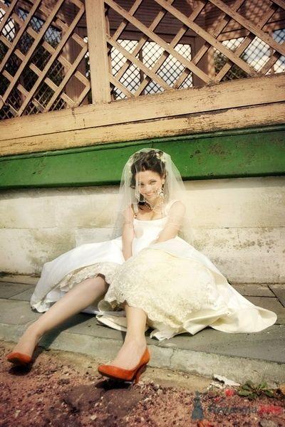Заячья свадьба или Любовь-морковь и все такое_2 - фото 58280 dimina lapa