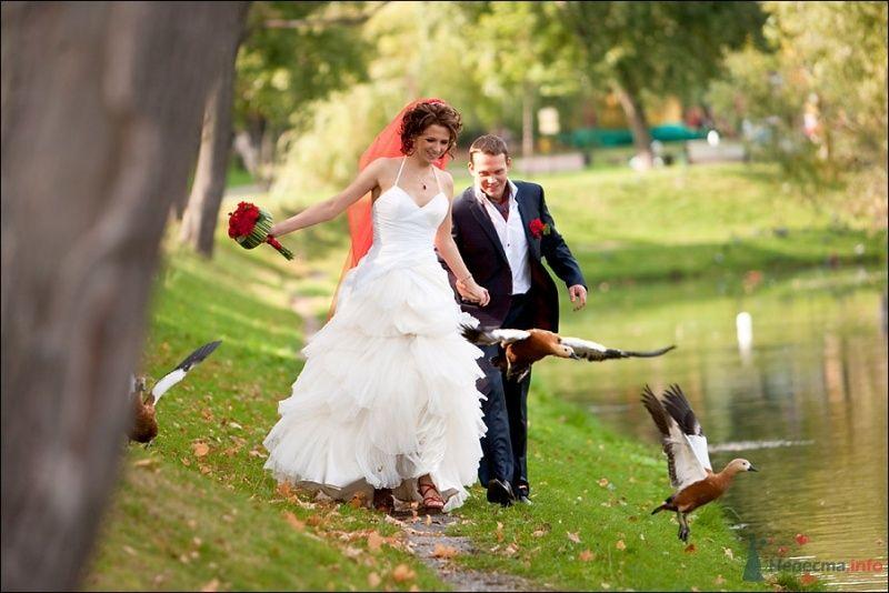 Жених и невеста идут вместе вдоль озера в парке - фото 53899 Tanuha