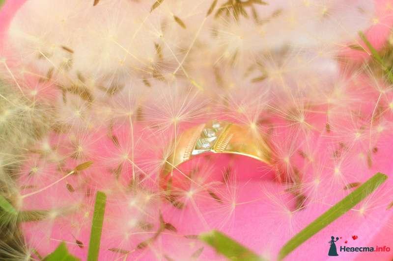 Фото 125847 в коллекции Love Story - Свадебный фотограф Денис Касецкий