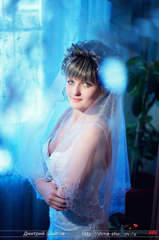 Фото 119690 в коллекции фотограф Дмитрий Шойтов - Дмитрий Шойтов
