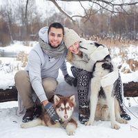 Зимняя лавстори, декор, собаки, хаски, снег