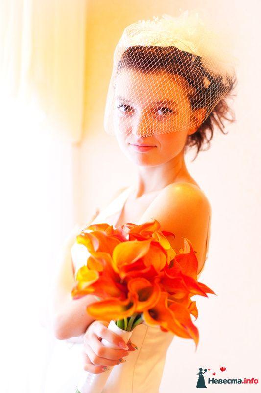 Классический портрет в ЗАГСе - фото 129717 Свадебный фотограф Максим Чесалин