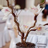Кофейная свадьба композиция с корилусом и орхидеей