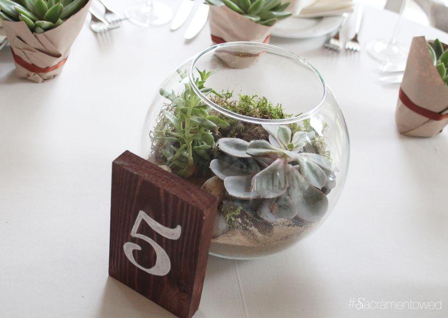 Террариум с суккулентами и мхом для украшения гостевого стола - фото 3187655 Студия декора Sacramento wedding