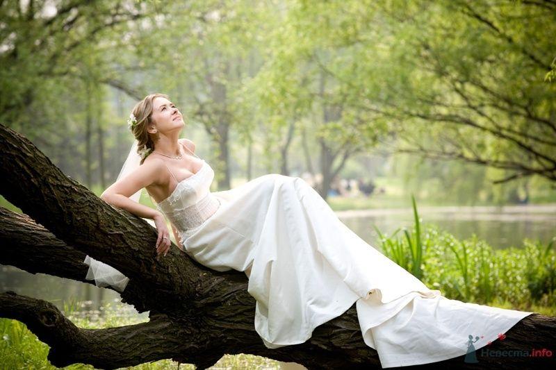 Невеста в белом длинном платье сидит на ветке дерева